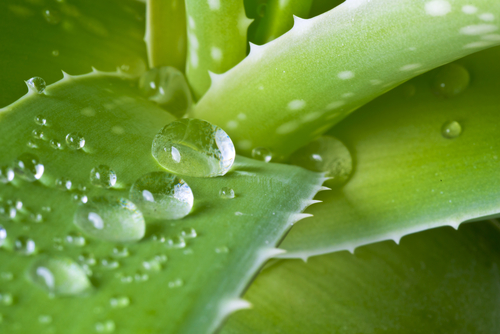 radiation therapy and aloe